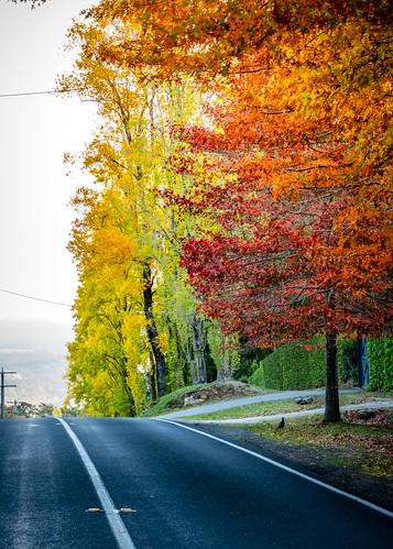 Mt Macedon Autumn Colours -28