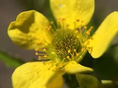 Abundance (serjanburlak) Tags: family flower nature fleur design abundance iphone6s