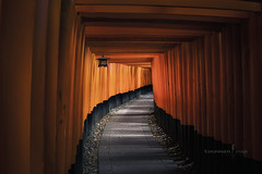 Fushimi Inari-taisha (TOONMAN_blchin) Tags: japan  fushimiinaritaisha toonman