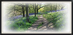 Bluebell grove. (stu.bloggs..Dont do Sundays) Tags: flowers trees light sunlight bluebells woodland landscape shadows path foliage wildflower dappled pathway northyorkshire roseberrytopping