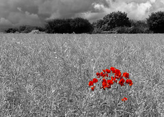 Poppies (Mary&Neil) Tags: woman dog walking mary elements pse mossvalley fz200