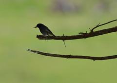 DSC_4694 (d90-fan) Tags: bird animals outdoors austria tiere sterreich natur schnecke vogel rauris hohetauern tauern krumltal murmeltiere raurisertal