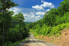 Sugarcamp Mountain (15) (Nicholas_T) Tags: road trees summer sky clouds rocks pennsylvania cumulus creativecommons dirtroad gravelroad endlessmountains loyalsockstateforest lycomingcounty sugarcampmountain sugarcampmountainroad