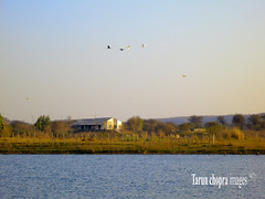 IMG_0249 (Tarun Chopra) Tags: india water landscape quiet relaxing nopeople hut s100 smalllake canons100 damdama birdsflying canonpowershots100
