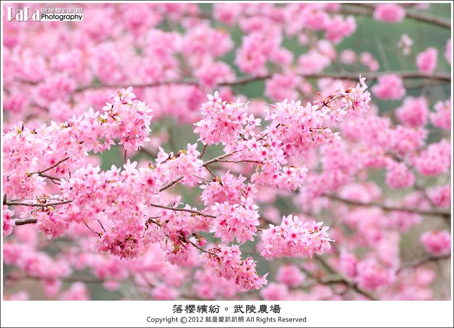 Wuling_0158