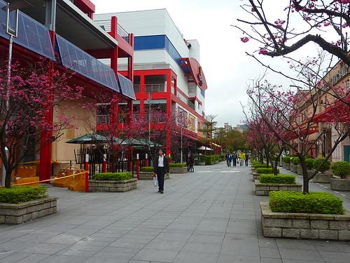 Sakura 2012。信義區的櫻花