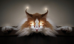 Devil Cat... (Sea Moon) Tags: pumpkin kitty evil stare satanic devious