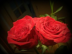 TWO ROSES (rlurama (On and Off)) Tags: roses excellentsflowers mimamorflowers