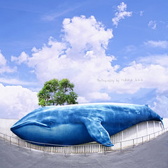 The Blue Whale (MAIKA 777) Tags: sky clouds flickr cielo nubes getty whale ballena gettyimages baleine cetáceo bluewhale balena sigma15mmf28exfisheye balaenopteramusculus ballenaazul img8127 canoneos5dmarkii maika777 loquetedigalarubia