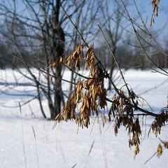 Les Vêtements d'hiver (Alexey Subbotin) Tags: spring winter kodake100g planar80mmf28cf hasselblad500c