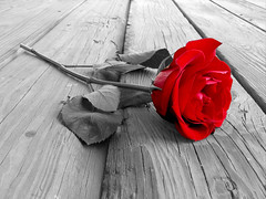 Rose On Wood BW (Mastechsolutions) Tags: wood boy red woman white man black flower cute men fall abandoned love glass girl beautiful rose closeup lady leaf women friend kiss couple pretty alone married heart you awesome husband valentine gift attractive letter wife lonely february quite marry isolated engage fallinlove relation