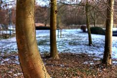 Curve (Serge Weyckmans) Tags: winter white snow tree nature canon 50mm belgium sigma 18 tamron arbre hdr xsi photomatix ganshoren 450d