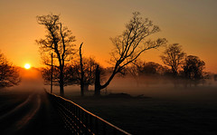 Morning Glory (fidget65) Tags: road morning trees light sun reflection colors silhouette fog fence dawn glow attingham homefarm