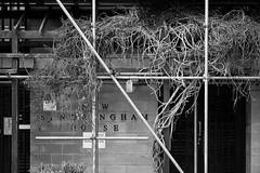 scafold & vine (Tristan Styles) Tags: leica uk england urban abstract southwest nature bristol unitedkingdom vine scafolding m9 copyright2012tristanstylesallrightsreserved