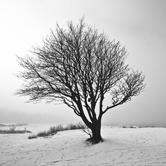 Exposed (Issa Fakhro) Tags: winter sky blackandwhite bw snow cold tree art beach nature beauty fog canon season landscape denmark photography skne europe flickr poetry photos sweden fineart footprints freezing philosophy chilly february scandinavia malm scania 2012 blackandwhitephotography artisticphotography resund sibbarp northerneurope 1635mm wideanglelense coldclimate resundsregionen followmeontwitterissafakhro issafakhro