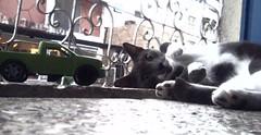Preguiçoso (ise_giovanna) Tags: verde animal branco grade gato bigode patas carro janela nublado olho chão boca cinza frio roda predio caminhão orelhas