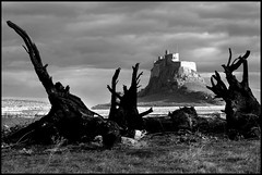 fire  wood  castle (John FotoHouse) Tags: bw castle lindisfarne 2012 dolan nothumbria johnfotohouse