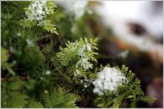 Januarwaldboden