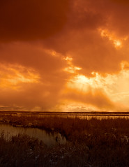 Great Salt Lake Utah USA (Utah Images - Douglas Pulsipher) Tags: travel sky sun storm reflection tourism grass clouds reflections reeds evening utah ut skies afternoon cloudy shoreline stormy greatsaltlake shore wetlands sunburst grasses marsh burst attraction riparian marshes birdrefuge farmingtonbay stansburyisland touristdestination wintercloud