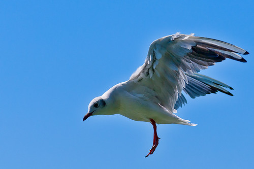 gull photographed in 1 second-03