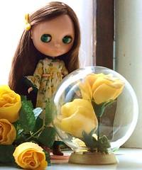 yellow roses (last)