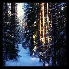 Promenad i vinterskog. (TinaOo) Tags: winter snow square vinter forrest squareformat skog february snö februari iphoneography instagramapp uploaded:by=instagramhefe