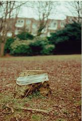 Sides (Will Hooper) Tags: tree film 35mm cut lofi stump stumped