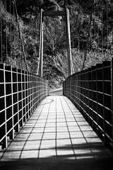 forest suspension bridge |  (l e o j) Tags: park bridge nature monochrome japan forest canon eos rebel kiss suspension no   mori nagasaki xsi x2   prefectural kenmin 450d kenminnomori
