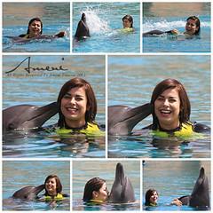 يوم رائع مع الدلافين بدبي (Améni | insta:queen_amanich ♥) Tags: يوم الامارات مع رائع اماني بدبي الدلافين