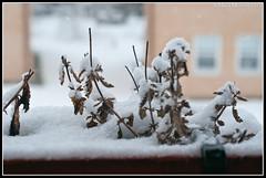Snow (mmoborg) Tags: sweden sverige mmoborg mariamoborg