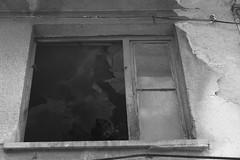 dog (OpethMania) Tags: boy car turkey garbage space ankara araba p