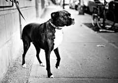dog (Craig Ward) Tags: dog montreal laurier
