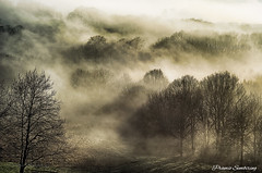 A Foggy Cold Winter Morning in Bochum, Germany (PramioGarson) Tags: morning travel trees winter sunlight mist mountain tree tourism nature beautiful beauty grass misty fog clouds forest germany dark landscape haze europe natural outdoor dusk background great foggy atmosphere jungle bochum hdr