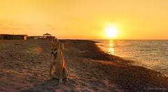 Good morning (Ahmed Dardig) Tags: travel sea dog sun beach animals sunrise landscape photography dahab redsea egypt explore goodmorning goldenhour explored southsinai rasabugalum