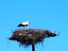 On the post (rgrant_97) Tags: portugal nature natureza abril alentejo fronteira alterdocho