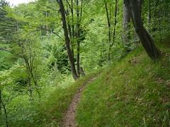 Reichenauer Kaisersteig (rudi_valtiner) Tags: trees alps green forest way austria sterreich path grn alpen wald bume niedersterreich autriche weg schneeberg pfad loweraustria reichenau hirschwang schwarzatal haaberg gahns kaisersteig wanderung20160530