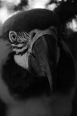 Monochrome Portrait (Michael Eickelmann) Tags: portrait bw white black nature monochrome birds animals tiere natur parrot sw vgel weiss schwarz papagei beautyful schn eintnig