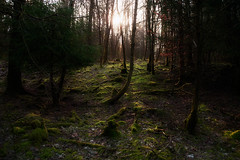 Enlightenment (Rainer Schund) Tags: morning light nature forest sunrise landscape nikon natur moor enlightenment landschaft wald moos lightrays morgens erleuchtung lichtstimmung nikond700 natureexploring moosbett