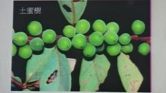 DSC07605 (yongheecs永和社大生態保育社) Tags: 林場