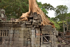DSC_7218 (Omar Rodriguez Suarez) Tags: tree arbol temple cambodia angkor camboya