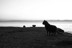 Cat after sunset (frfourrier) Tags: sea portrait blackandwhite bw cat canon noir athens greece 5d et blanc