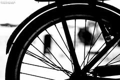 Wheel (Kindallas) Tags: wheel shadow bike abstract abstraction geometry praia grande brazil beach summer sun outdoor bokeh 50mm t5 canon