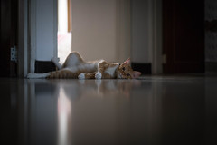 Dogs have owners, cats have staff.... (Just lovin' it) Tags: cats pets cute cat lazy