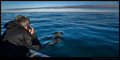 Martin Brunella y delfines en Las Grutas