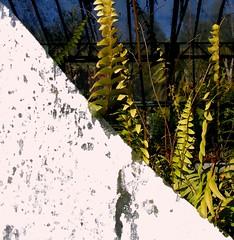 lisbon (whistle.and.run) Tags: blue sky plants white abandoned overgrown peeling paint bluesky greenhouse peelingpaint derelict distressed