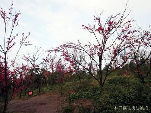 林口霧社街胡亂拍-IMG_4123