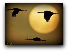 ~ Going Home ~ (stephgum32807) Tags: sun nature birds tampa nikon florida kodachrome textured artistictreasurechest creativephotocafe