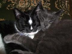 Bertie and (Stuart Axe) Tags: sleeping pet cats pets cat kitten sleep kittens sleepingcat cuddle bertie