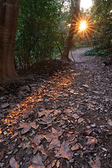 Laconi - Aymerich Sunset (Rob McFrey) Tags: sardegna light sunset italy parco sun leaves foglie landscape nikon scenery i