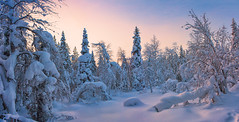 Snow garden (Thierry Hennet) Tags: blue winter panorama white snow tree zeiss landscape frozen finnland sony scenic lapland cloudysky tranquilscene kslompolo a900 coldtemperature cz2470mmf28